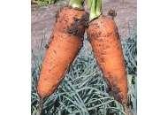 Шантане - морква, 500 гр, Clause (Клоз) Франція фото, цiна