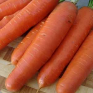Анета F1 - морковь, Moravoseed (Моравосид)  фото, цена