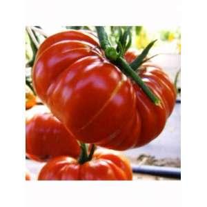 Брутус - томат индетерминантный, кг, Moravoseed (Моравосид), Чехия фото, цена