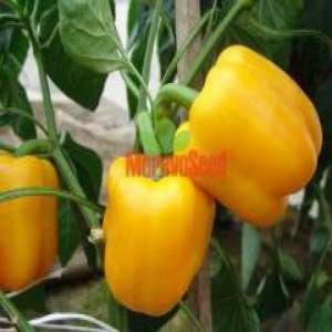 Гарнет F1 - семена перца, 500 семян, Moravoseed (Моравосид), Чехия фото, цена