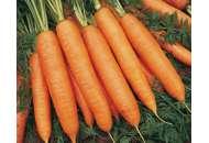 Марион F1 - морковь,100 000с , Moravoseed (Моравосид)  фото, цена