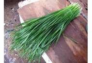 Страда - лук на перо, кг, Moravoseed (Моравосид), Чехия фото, цена
