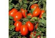 УГ (UG) 8168 F1 - томат детерминантный, 5 000 семян, United Genetics фото, цена