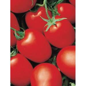 Яки F1 - томат детерминантный, Seminis (Семинис) Голландия фото, цена