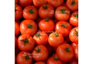Анталия F1 - томат индетерминантный, Yuksel Tohum фото, цена