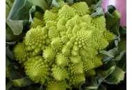 Вероника F1 - капуста цветная, 2 500 семян, Bejo (Бейо), Голландия фото, цена