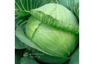 Парадокс F1 - капуста белокочанная, 2 500 семян, Bejo (Бейо), Голландия фото, цена