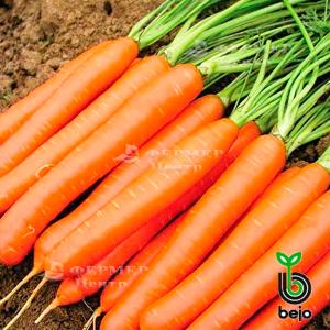 Белградо F1 - морковь, 100 000 семян (1,6-1,8 мм), Bejo Голландия фото, цена