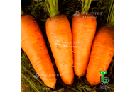 Кордоба F1 - морковь, 100 000 семян, (1,6-1,8 мм), Bejo Голландия фото, цена