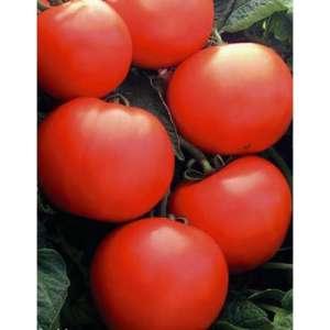 Дебют F1 - томат детерминантный, 1 000 семян, Seminis (Семинис) Голландия фото, цена