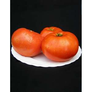 Мирсини F1 - томат детерминантный, 1 000 семян, Seminis (Семинис) Голландия фото, цена