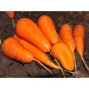Ред Кор - морковь, 1000 грамм, Nunhems (Нунемс) Голландия фото, цена
