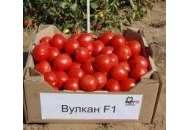 Вулкан F1 - томат детерминантный, Nunhems (Нунемс) Голландия фото, цена