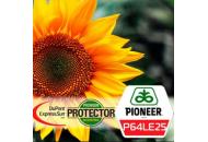 P64LE25 Круизер 350 FS Аско - семена подсолнечника,1п.е., Pioneer (Пионер) Дюпон фото, цена