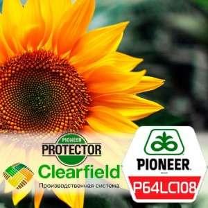P64LC108 - подсолнечник, 1 п.е., Pioneer (Пионер) фото, цена