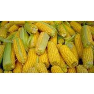 PR38N86 - кукуруза, 80 000 семян, Pioneer (Пионер) фото, цена