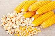 Попкорн - кукуруза, 10 гр., Цезарь фото, цена