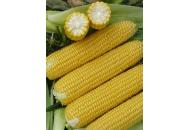 Кукуруза Старшайн F1 - 50 000 семян, Syngenta (Сингента), Голландия фото, цена