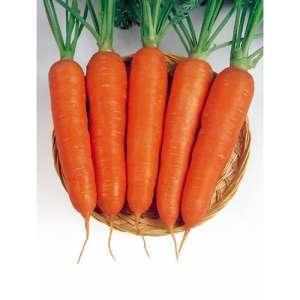 Виктория F1 - морковь, Seminis (Семинис) Голландия фото, цена