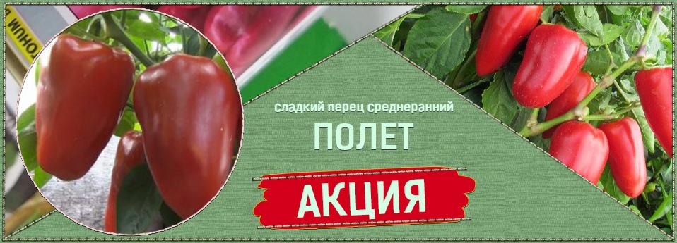 polet-rus