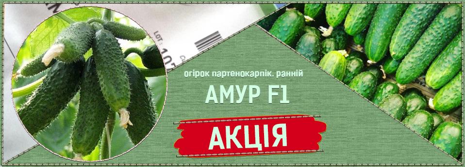 amur-ukr