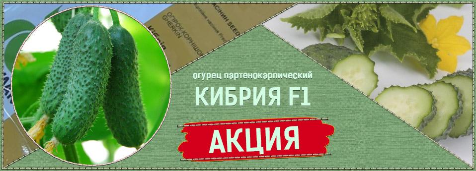 kibr-ru