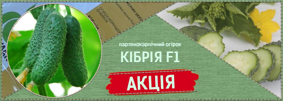 kibr-ua