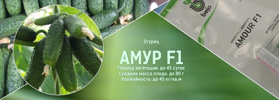 amur-rus