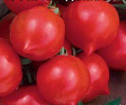 Примадонна F1 - томат детерминантный, 5 гр. фото, цена