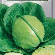 Бирюза - капуста белокочанная, 0,5 кг, Satimex Германия фото, цена