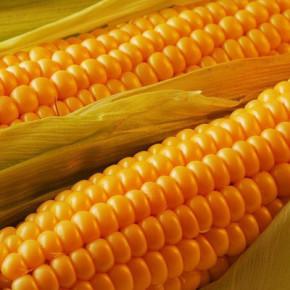 P9025 - кукуруза, 80 000 семян, Pioneer (Пионер), Украина фото, цена