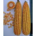 P9000 - кукуруза, 80 000 семян, Pioneer (Пионер), Украина фото, цена