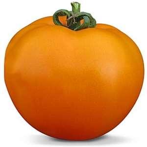 КС 17 F1 - томат детерминантный, 1000 семян, KITANO фото, цена