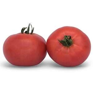 Кибо (КС 222 F1) - томат индетерминантный, 1000 семян, KITANO фото, цена