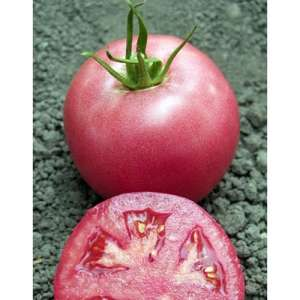 Пинк Уникум F1 - томат индетерминантный, 500 семян, Seminis (Семинис) Голландия фото, цена