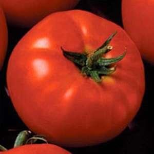 Президент II F1 - томат индетерминантный, 500 семян, Seminis (Семинис) Голландия фото, цена
