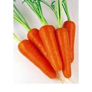 Абако F1 - морковь (фракция 1,6 - 1,8), 1 000 000 семян, Seminis (Семинис), Голландия фото, цена