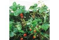 Сетка для защиты от птиц Ортофлекс 10м х 2м (зеленый)