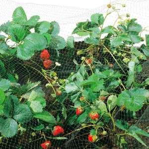 Сетка для защиты от птиц Ортофлекс 250м х 4м (зеленый) фото, цена