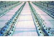 Агроткань Агроютекс 100 100м х 2,1м (белая), Agrojutex (Агроютекс) Чехия