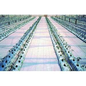 Агроткань Агроютекс 100 100м х 2,1м (белая), Agrojutex (Агроютекс) Чехия фото, цена