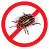 Эффективное средство от колорадского жука: экологичные способы борьбы с опасным вредителем