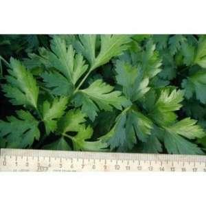 Новас - петрушка листовая, 100 г, Clause Франция фото, цена