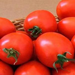 Апгрейд F1 - томат детерминантный, 25 000 семян, Esasem Италия фото, цена