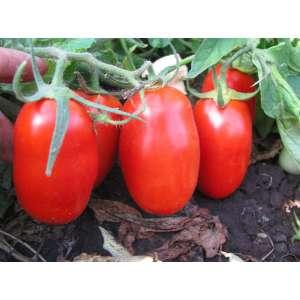 Глэдис F1 - томат детерминантный, 25 000 семян, Esasem Италия фото, цена