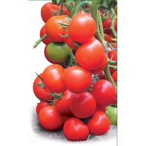 Тайлер F1 - томат индетерминантный, 100 семян, KITANO фото, цена