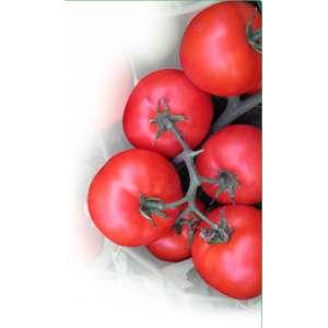 Вирта F1 - томат детерминантный, 1000 семян, KITANO фото, цена