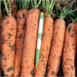Фидра F1 - морковь, 100 000 семян (1,8-2,0), Rijk Zwaan (Рийк Цваан), Голландия фото, цена