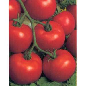Арфа F1 - томат детерминантный, 1000 семян, Nasko Украина фото, цена