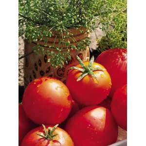 Баллада - томат детерминантный, 1000 семян, Nasko Украина фото, цена
